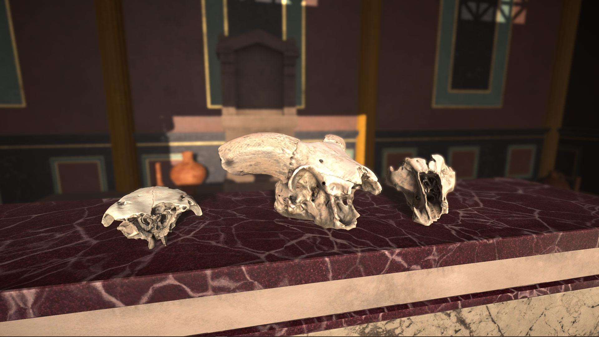 schedel3